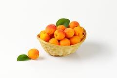 Fresh ripe apricots Royalty Free Stock Photography