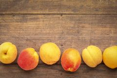 Fresh ripe apricots on a rustic wood Royalty Free Stock Images