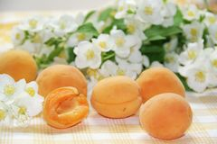 Fresh ripe apricots Royalty Free Stock Photo