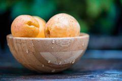 Fresh ripe apricots in wooden bowl outdoors. Blurred background. Close up delicious organic apricots in wooden bowl. Summer vegetarian diet. Selective focus royalty free stock photography