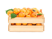 Fresh ripe apricots in wooden box stock image