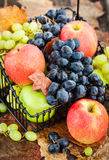 Fresh ripe autumn apples and grapes Stock Photos