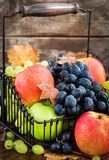 Fresh ripe autumn apples and grapes Royalty Free Stock Photos