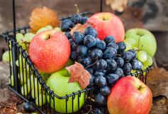 Fresh ripe autumn apples and grapes Stock Image