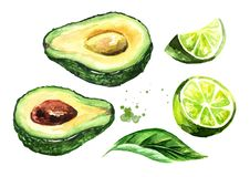 Fresh ripe avocado and lime set. Watercolor hand drawn illustration, isolated on white background. Fresh ripe avocado and lime set. Watercolor hand drawn royalty free illustration