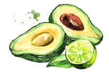 Fresh ripe avocado with lime. Watercolor hand drawn illustration isolated on white background. stock illustration