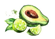 Fresh ripe avocado with lime. Watercolor hand drawn illustration, isolated on white background. royalty free illustration