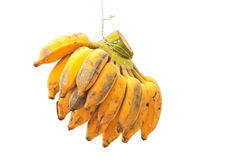 Fresh ripe bananas Royalty Free Stock Photo