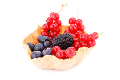 Fresh ripe berries in tartlet. Isolated on white background Royalty Free Stock Images