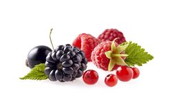 Fresh ripe berry in closeup. Raspberry, blackberry and currant berries isolated. Berries with leaves stock photos