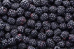 Free Fresh Ripe Blackberries As Background Stock Image - 123608261