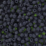 Fresh Ripe Blackberries Stock Photography
