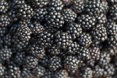 Fresh ripe blackberries. Food background. Fresh ripe blackberries. Food background Stock Photo