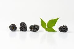 Fresh ripe blackberries Stock Images