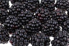 Fresh Ripe Blackberries. On white background Royalty Free Stock Image