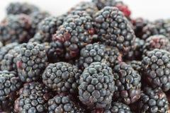 Fresh ripe blackberries. In white bowl Stock Image
