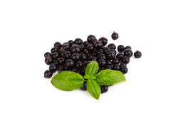 Fresh ripe blackcurrant isolated on white background Stock Photography