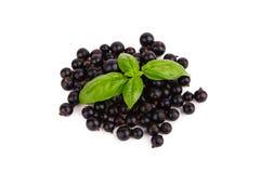 Fresh ripe blackcurrant isolated on white background Royalty Free Stock Images