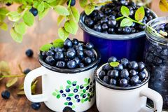 Fresh ripe bluberries bilberries in enamel mugs stock images