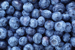 Fresh ripe  blueberries berries Royalty Free Stock Image