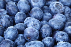 Fresh ripe blueberries closeup Royalty Free Stock Image