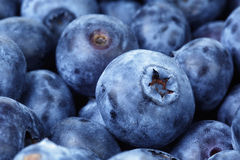 Fresh ripe blueberries closeup Royalty Free Stock Photos
