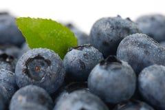 Fresh ripe blueberries Stock Image