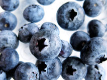 Fresh Ripe Blueberries Royalty Free Stock Photo
