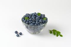 Fresh ripe blueberries Stock Photos