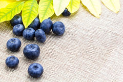 Fresh ripe blueberries with leaves on linen cloth Stock Photography