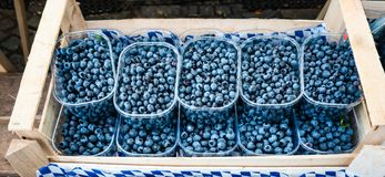 Fresh Ripe Blueberries `Top Hat` on sale in small plastic bowls within a wooden market box.  stock photos