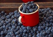 Fresh ripe blueberry berries in old metal mug Royalty Free Stock Images