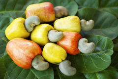 Fresh Ripe Brazilian Caju Cashew Fruit. Colorful display of fresh ripe Brazilian caju cashew fruit in red, orange, and yellow on green leaves stock photos