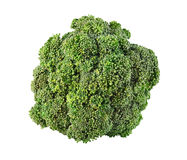 Fresh ripe broccoli tree with green leaves isolated on white Royalty Free Stock Photo