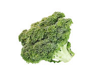 Fresh ripe broccoli tree with green leaves isolated on white Royalty Free Stock Images