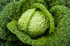 Fresh ripe cabbage Stock Photography