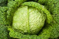 Fresh ripe cabbage Royalty Free Stock Image