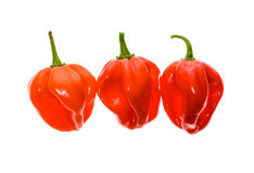 Fresh ripe Caribbean Red Habanero hot chili pepper. With green stem. Isolated on white royalty free stock images