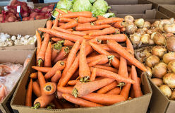 Fresh ripe carrot and over vegetables of new harvest Stock Photos