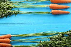 Ripe carrots. Fresh and ripe carrots on blue wooden table Royalty Free Stock Photo
