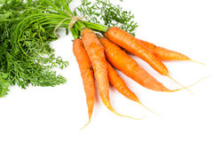 Fresh ripe carrots Royalty Free Stock Image