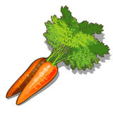 Fresh ripe carrots on a white background, Royalty Free Stock Photo
