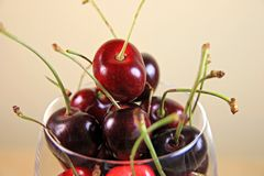 Fresh Ripe Cherries Royalty Free Stock Photo