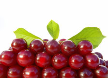 Fresh ripe cherries with leaves Stock Photo