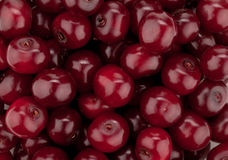 Fresh ripe cherries pattern Royalty Free Stock Image