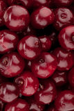 Fresh ripe cherries pattern Stock Image