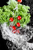 Fresh ripe cherry tomatoes with lettuce and water drops isolated on black, harvest vegetables concept Royalty Free Stock Photography