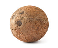 Fresh ripe coconut Royalty Free Stock Photography