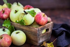 Fresh ripe colorful apples in wooden box. On rustic background royalty free stock photo