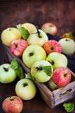 Fresh ripe colorful apples in wooden box on rustic background stock image